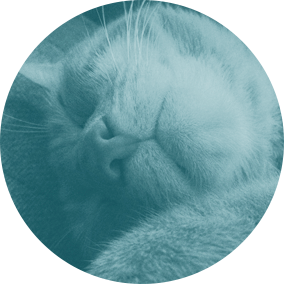 Napcats - Read our blog