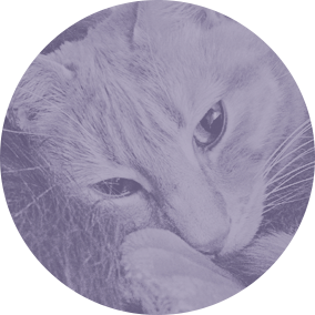 Napcats - Our cat sitting services in glasgow